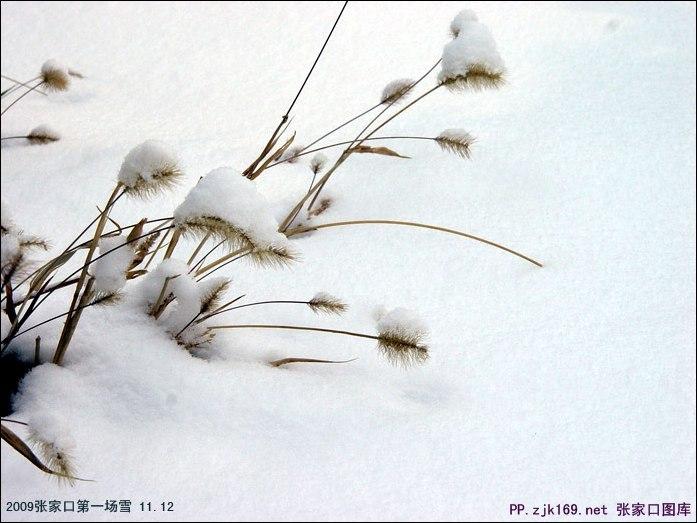 lovebet爱博网址的雪