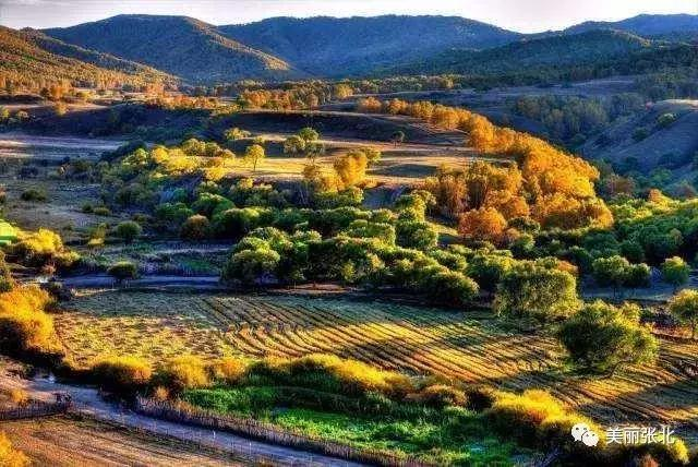 张家口桦皮岭的秋天,只看一眼就沦陷了