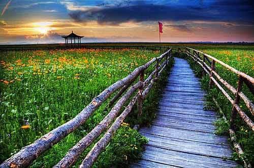 通往花海草原